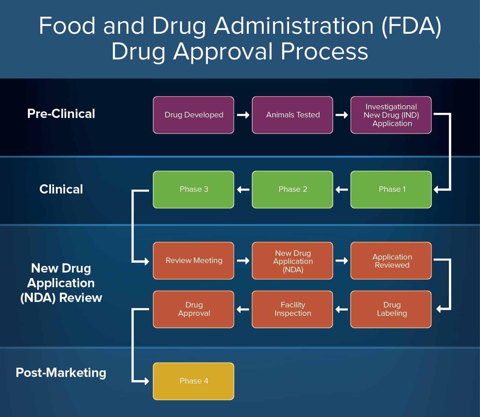 FDA Drug Approval Process Infographic Horizontal